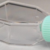 600ml Non Treated Non Vented Tissue Culture Flask, TCF-001-600